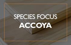 Blog Post: Species Focus - Accoya