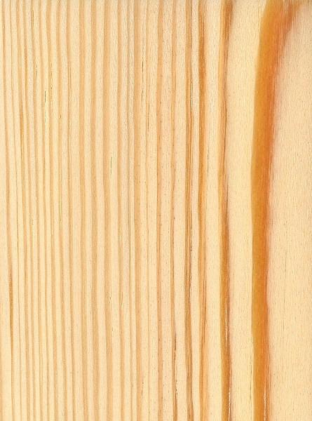 Southern Yellow Pine Pinus Palustris Pinaceae