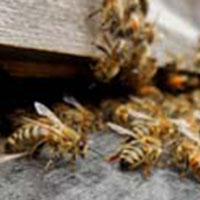 Beehives image