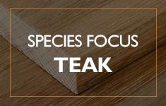 Blog Post: Species Focus - Teak